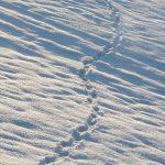 bildmitte_winterwanderung-2