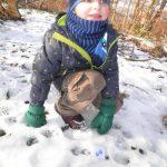 auf-spurensuch-im-winterwald