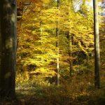 Herbstwald, Foto:  R. Wolf
